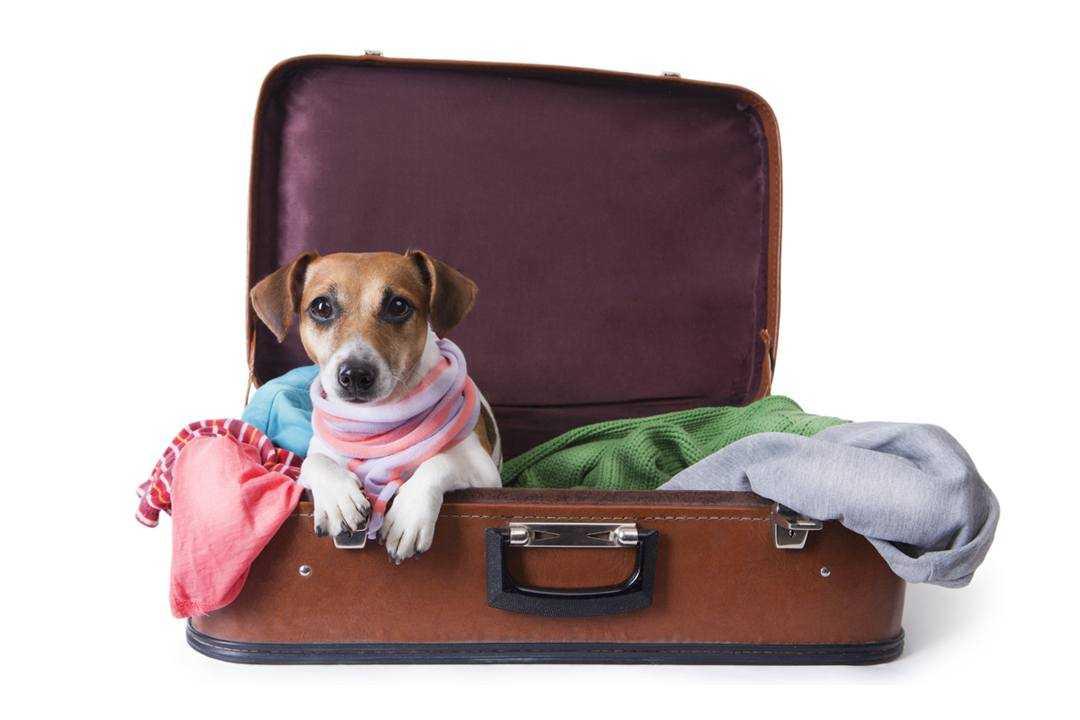 como viajar con mascotas en venezuela