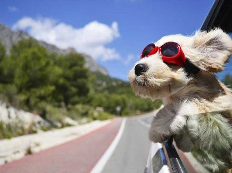 viajar con mascotas en venezuela